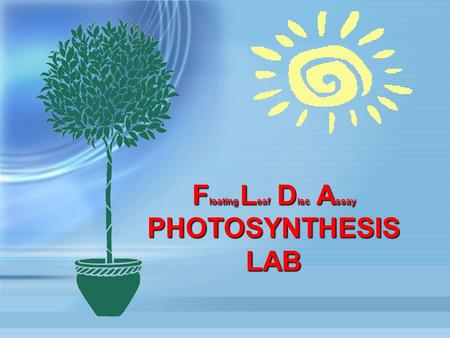 F loating L eaf D isc A ssay PHOTOSYNTHESIS LAB. 2 Your Problem To design an experiment to quantify the effect of an abiotic factor on the rate of PhotosynthesisTo.