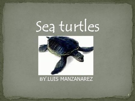 Sea turtles BY. LUIS MANZANAREZ 1. 2 Table of Contents Introduction -------------------------------------------------------------pg. 3 Physical Description.