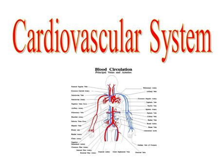 Cardiovascular system Function 1.Transports blood (which contains nutrients, hormones, and gases) 2.Gas Exchange 3.Helps maintain constant body temperature.