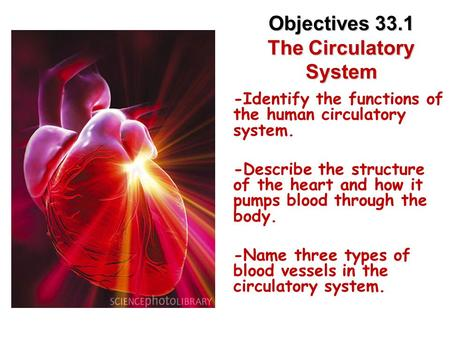 Lesson Overview Lesson Overview The Circulatory System Objectives 33.1 The Circulatory System -Identify the functions of the human circulatory system.