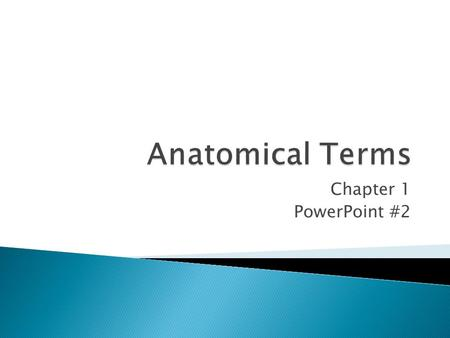 Chapter 1 PowerPoint #2. In anatomical position, the body is erect, with head and toes pointed forward and arms hanging at sides with palms facing forward.