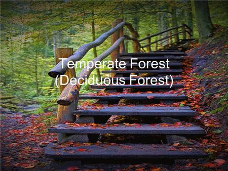 Temperate Forest (Deciduous Forest). Geographic location Climate South of the boreal forests in eastern North America, eastern Asia, Australia, and Europe.
