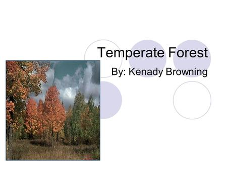 Temperate Forest By: Kenady Browning. eastern North America northeastern Asia western and central Europe.