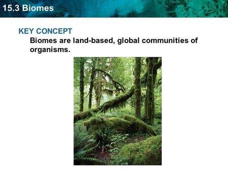 15.3 Biomes KEY CONCEPT Biomes are land-based, global communities of organisms.