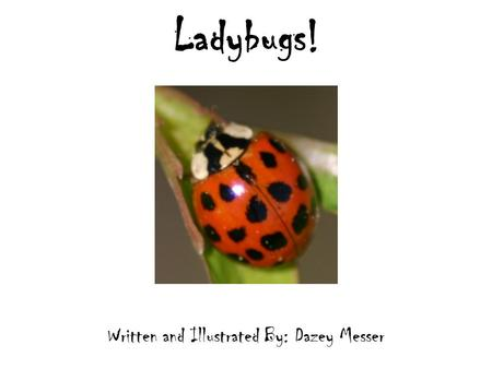 Ladybugs! Written and Illustrated By: Dazey Messer.