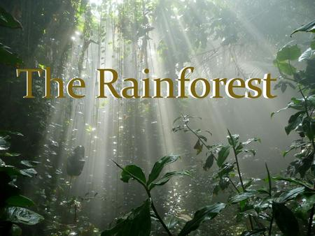 This is my project on the rainforest. In my project there are facts about animals that live in the rainforest, plants that grow there and a tribe that.