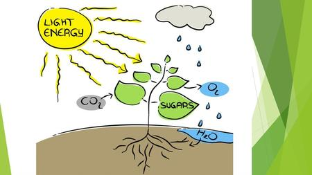 Photosynthesis Used by Autotrophs Plants, Algae, and some Bacteria.