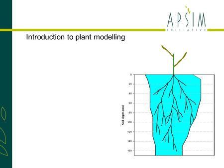 Introduction to plant modelling. Phenology Most important stages: Sowing, Flowering & Maturity. Each phase develops through cumulative thermal time, can.
