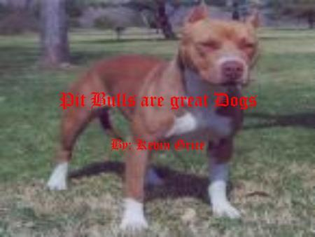 Pit Bulls are great Dogs By: Kevin Grice Pit bulls often are very aggressive towards other animals. This is something that can be socialized out of.