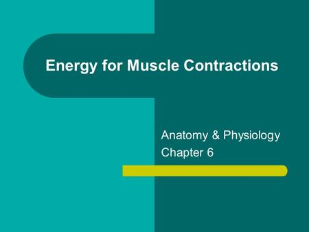 Energy for Muscle Contractions Anatomy & Physiology Chapter 6.