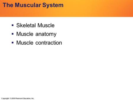 Copyright © 2009 Pearson Education, Inc. The Muscular System  Skeletal Muscle  Muscle anatomy  Muscle contraction.