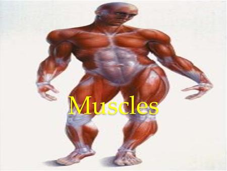 Muscles. Mitochondria The mitochondria are organelles that provide, energy for the cells. They convert energy into forms that are usable by the cell.