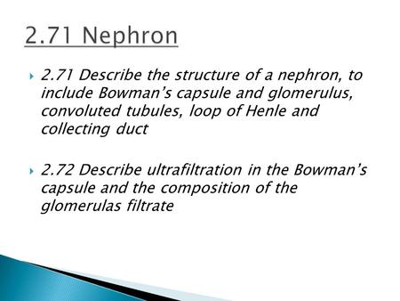  2.71 Describe the structure of a nephron, to include Bowman's capsule and glomerulus, convoluted tubules, loop of Henle and collecting duct  2.72 Describe.