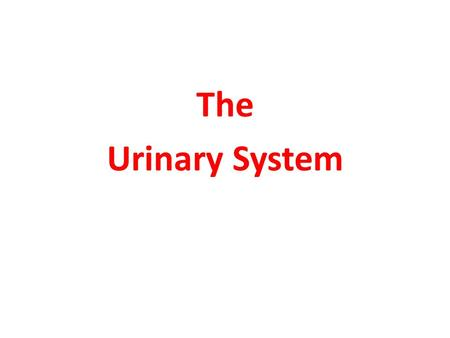 The Urinary System. Structure It consists of: Kidney Ureter Urinary bladder Urethra.