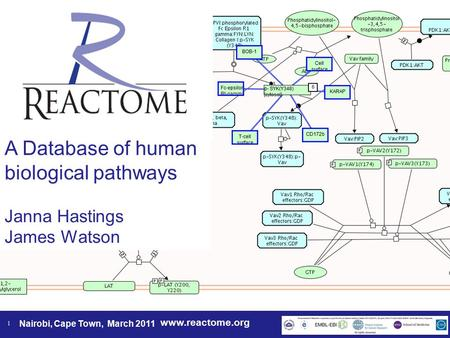 Www.reactome.org Nairobi, Cape Town, March 2011 1 A Database of human biological pathways Janna Hastings James Watson.