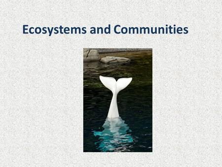 Ecosystems and Communities. Interactions What organisms would live in this community? What are their interactions?