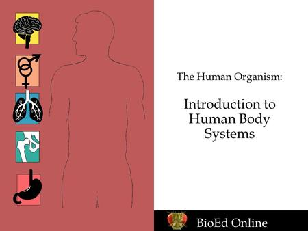 The Human Organism: Introduction to Human Body Systems BioEd Online.