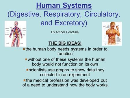 Human Systems (Digestive, Respiratory, Circulatory, and Excretory) THE BIG IDEAS! the human body needs systems in order to function without one of these.