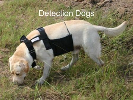 Detection Dogs. A vital aspect of a forensic investigation may be to detect and locate specific ______ or __________ of interest, ranging from illegal.