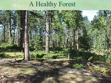 A Healthy Forest. Is No Accident! What are the Characteristics of a Healthy Forest? Plant Diversity Wildlife Diversity Low Susceptibility to Disease.
