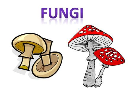 Characteristics of Fungus Eukaryotes. Have cell walls. Heterotrophs {must consume food for energy} They feed by absorbing their food. Use spores to reproduce.