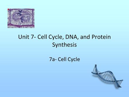 Unit 7- Cell Cycle, DNA, and Protein Synthesis 7a- Cell Cycle.