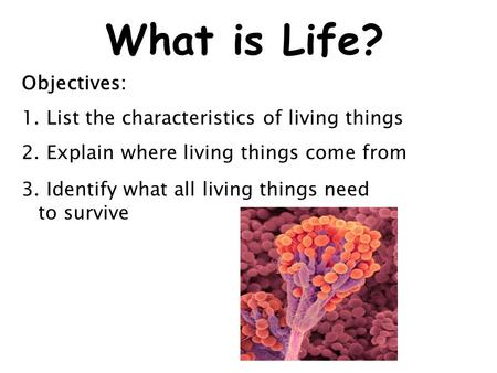 What is Life? Objectives: 1. List the characteristics of living things 2. Explain where living things come from 3. Identify what all living things need.