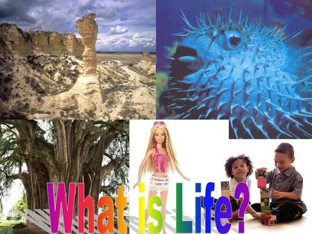 Any living thing is an organism What makes a living thing a living thing?