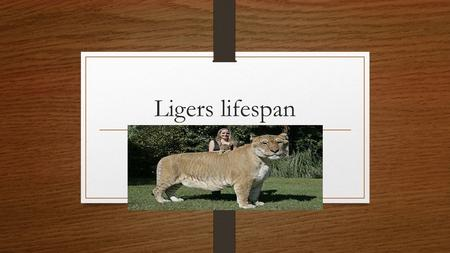 Ligers lifespan. Topic 1. The topic of my project is Ligers lifespan. I am interested in this topic because I was told that ligers have a short lifespan.