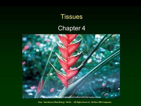 Stern - Introductory Plant Biology: 9th Ed. - All Rights Reserved - McGraw Hill Companies Tissues Chapter 4 Copyright © McGraw-Hill Companies Permission.