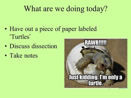 What are we doing today? Have out a piece of paper labeled 'Turtles' Discuss dissection Take notes.
