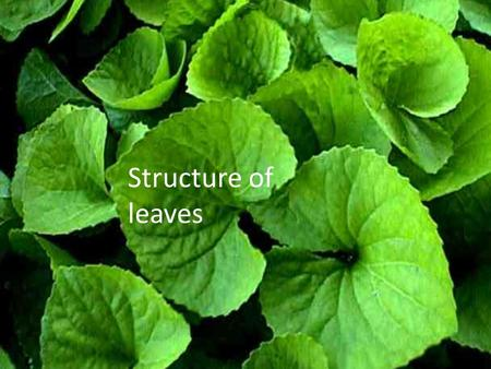 Structure of leaves. External structures of a leaf Lamina Mid rib petiole Stem Veins.