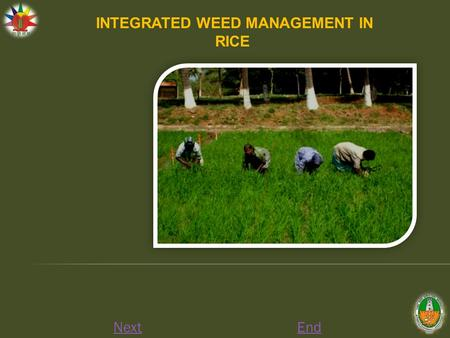 NextEnd INTEGRATED WEED MANAGEMENT IN RICE. Nursery Apply any one of the Pre-emergence herbicides viz., Butachlor 2 l/ha, Thiobencarb 2/ha, Pendimethalin.