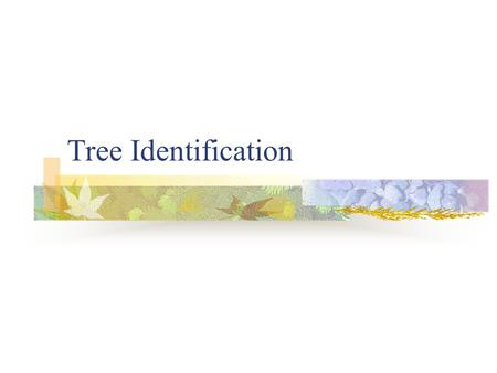 Tree Identification. Tree Identification Characteristics In order to correctly identify trees in nature it is important to know certain characteristics.