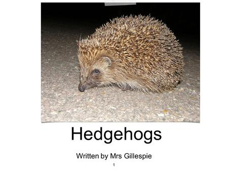 Hedgehogs 1 Written by Mrs Gillespie. 2 A hedgehog has fur on its legs and tummy and thousands of spikes on its back and sides. The spikes protect the.