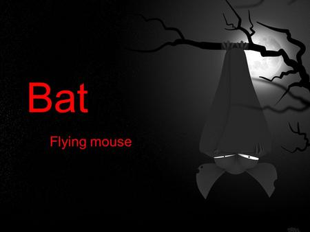 Bat Flying mouse. Main Facts ★ Bats are the only mammals that can fly. ★ There are about 1 100 bat species wordwide and 22 species are known in Slovakia.