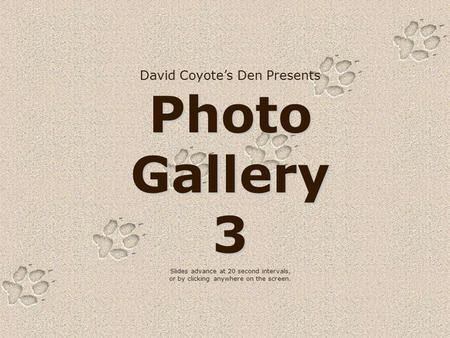 David Coyote's Den Presents Photo Gallery 3 Slides advance at 20 second intervals, or by clicking anywhere on the screen.