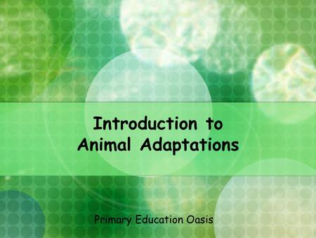 Introduction to Animal Adaptations Primary Education Oasis.