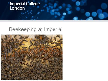 Beekeeping at Imperial. Why should we keep bees at Imperial? Beekeeping would form a part of the wider sustainability campaign at Imperial, by increasing.