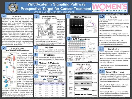Wnt/β-catenin Signaling Pathway Prospective Target for Cancer Treatment Emelia E Conte 1, Jun Yin 2, Mei Zhang 2 Western Blot Introduction.