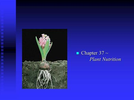 N Chapter 37 ~ Plant Nutrition. I. Nutrients n A. Essential: required for the plant life cycle u 1. Macro- (large amounts) carbon, oxygen, hydrogen, nitrogen,