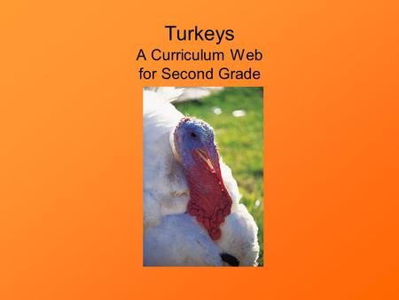 Turkeys A Curriculum Web for Second Grade. Click here to go to the teacher's guide. Click here if you are a student.