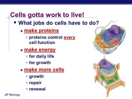AP Biology Cells gotta work to live!  What jobs do cells have to do?  make proteins  proteins control every cell function  make energy  for daily.
