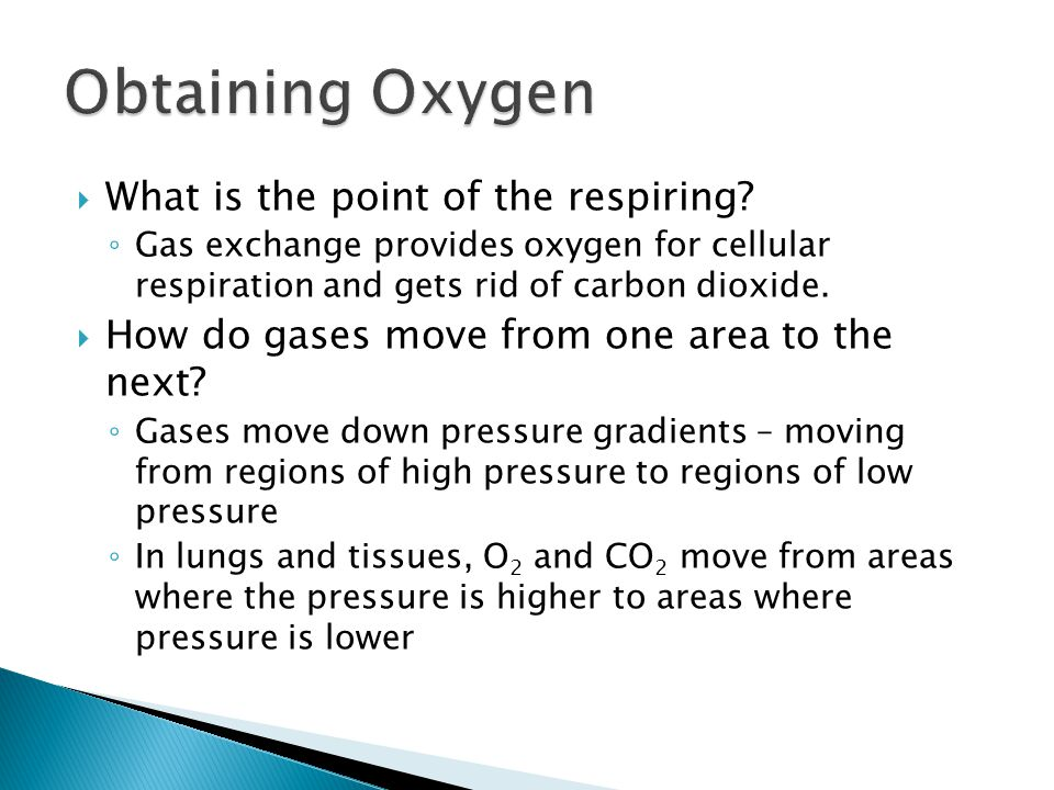  Where can animals get oxygen.◦ From air and water.