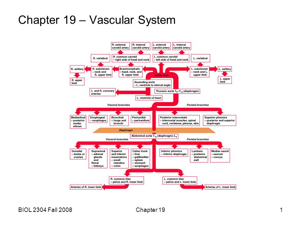 BIOL 2304 Fall 2008Chapter 192 A.categories and general functions: 1.