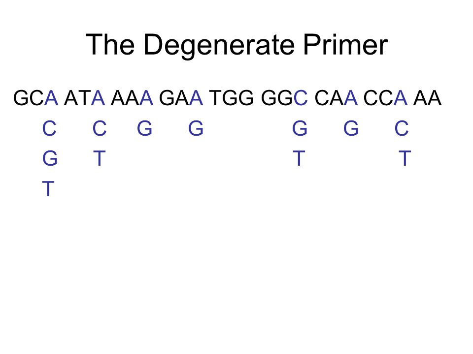 Test the Primers PCR