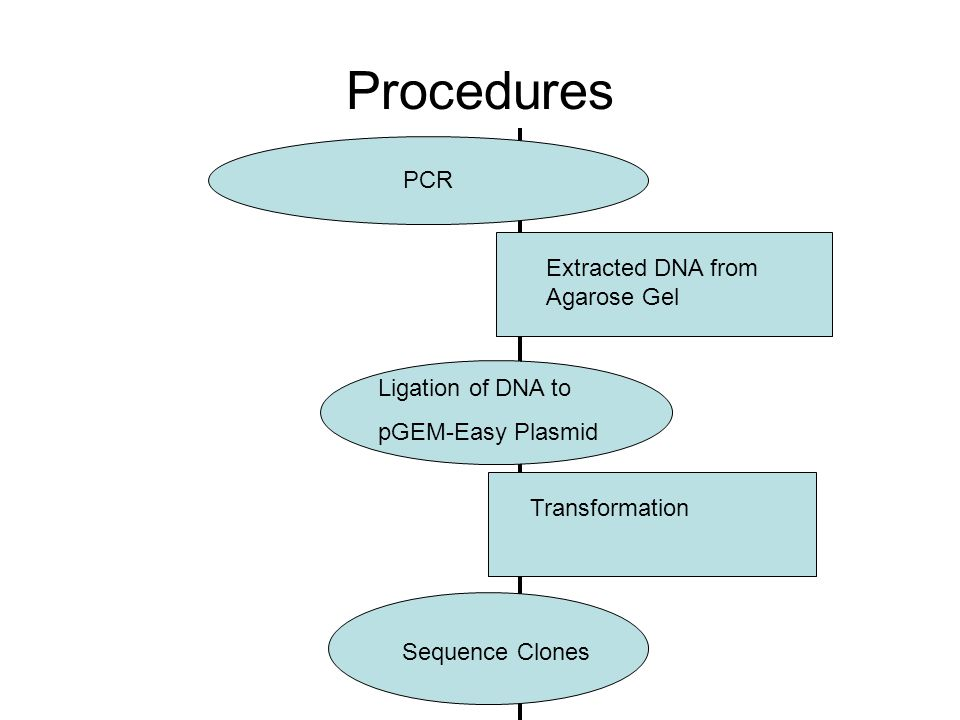 Ligation of DNA to pGEM-Easy Plasmid PLASMID DNA LIGATION