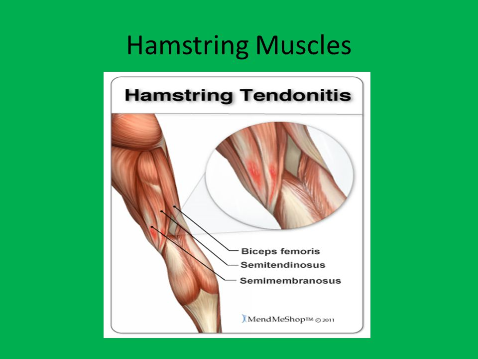 Hamstring Hamstring Muscles (3): -Biceps Femoris -Lone lateral hamstring muscle - Biceps meaning 2 heads -Distally: -the biceps femoris does cross the knee joint and both the short-head and long-head come together and attach to the Head of the Fibula.