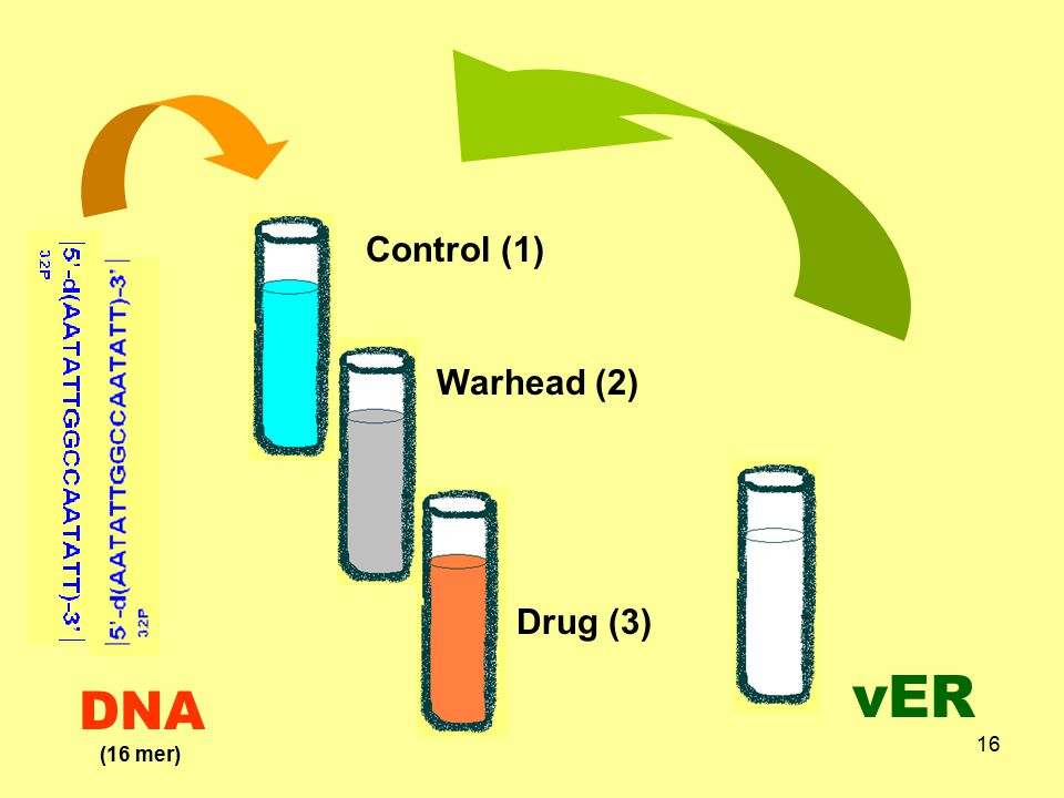 17 Gel electrophoresis Analyze gel by PhosphoImager DNA migrationretarded due tocomplex with ER-LBD Where; (1)Untreated DNA (2)Warhead modified DNA +vER (3)Drug modified DNA+ vER