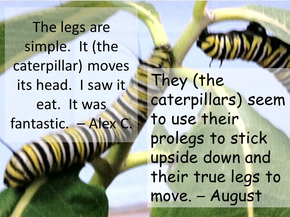 One (caterpillar) is close to the water.Watch out!.